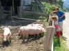 bergschweine007low