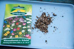 Wiesenblumen und Kräuter Quedlinburger