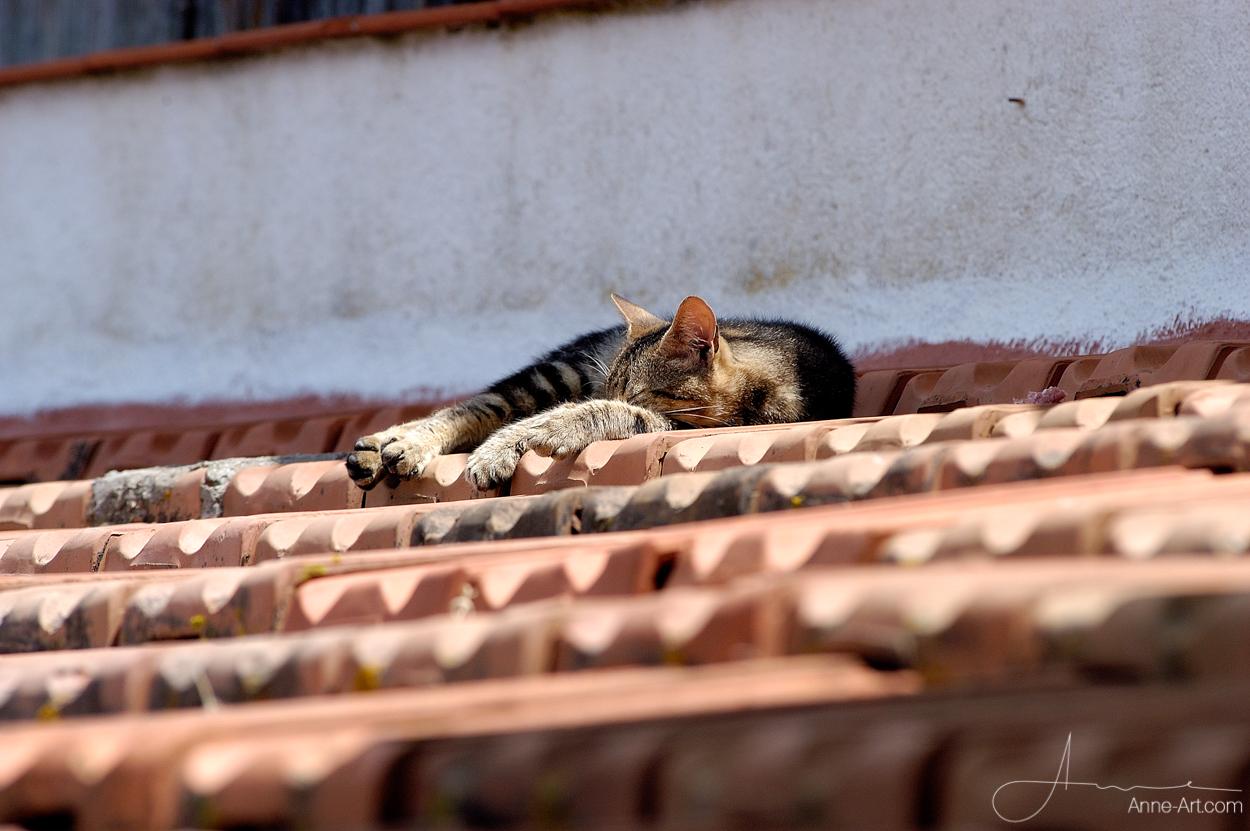 Katze auf Dach