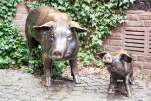 Schweine in Buxtehude