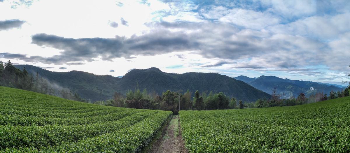Teefelder Shi von Alice Grünfelder
