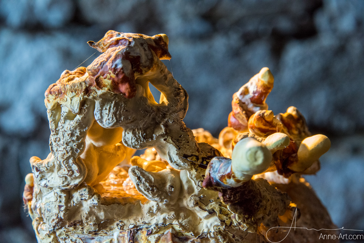 Reishi - Pilz des ewigen Lebens